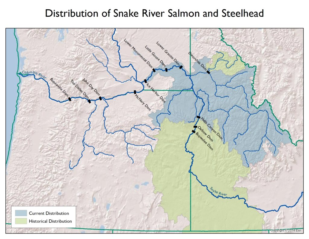 Idaho's Salmon and Steelhead: An Introduction on sawtooth national recreation area, clearwater river, bruneau river idaho map, wallace idaho map, coeur d'alene, kootenay river, selway river map, clearwater river idaho map, idaho county map, salt river, detailed idaho road map, the river wild, salmon id, sawtooth range, middle fork salmon river, idaho lakes map, clark fork, lewiston idaho map, pend oreille river, deep creek idaho map, rivers in idaho on map, idaho back road map, boise idaho map, hells canyon idaho map, lake pend oreille, coeur d'alene idaho map, snake river, borah peak, spokane river, clark fork river idaho map, idaho falls, salmon idaho map google, devils creek idaho map, idaho highway map, columbia river map, hells canyon,